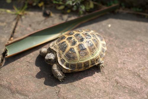 Basking Tortoises